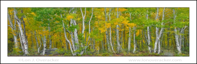 Aspen Grove Panoramic, Silver Lake, Eastern Sierra