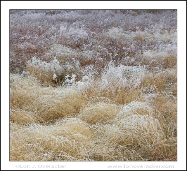 Grass Diversity, Leidig Meadow, Yosemite